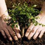 Идемте сажать деревья